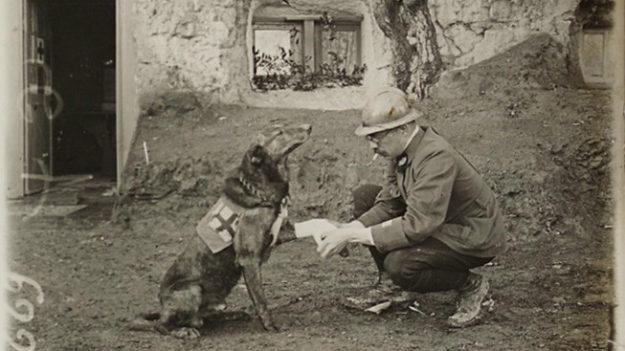 Chien pendant la Première Guerre Mondiale