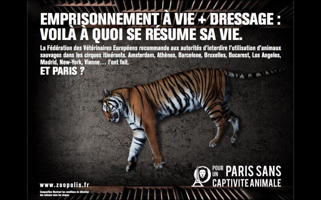 un tigre chapp d 39 un cirque est tu paris romain paris. Black Bedroom Furniture Sets. Home Design Ideas