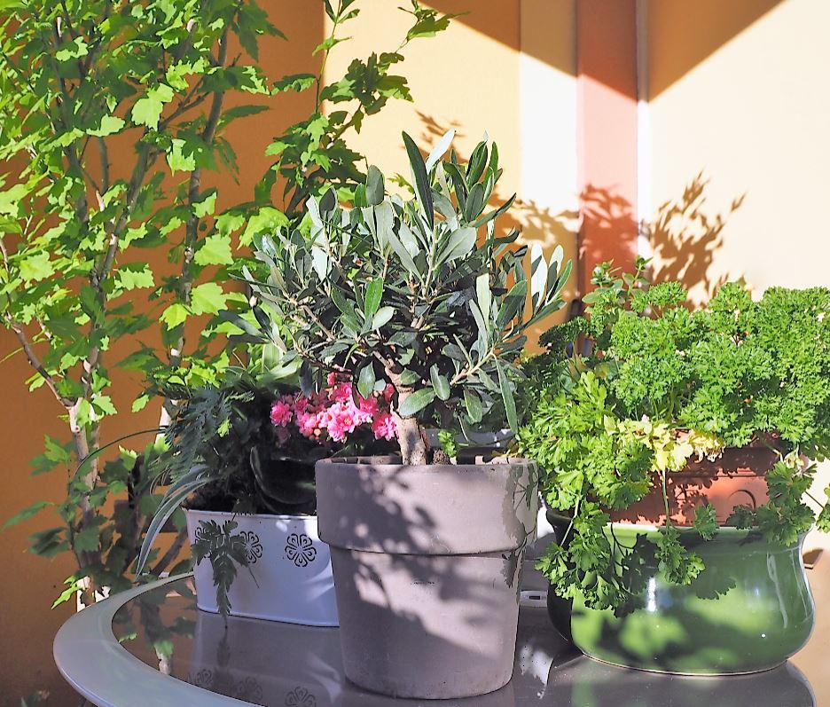 offrir des fleurs un homme f te des p res romain paris. Black Bedroom Furniture Sets. Home Design Ideas