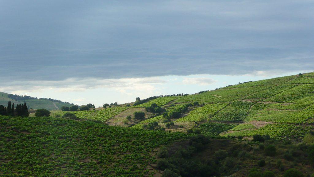 Vignoble sur les coteaux de Banyuls Photo Steve & Jemma Copley